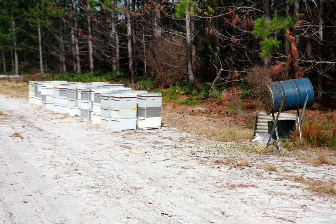 Beebuild pollen substitute-34