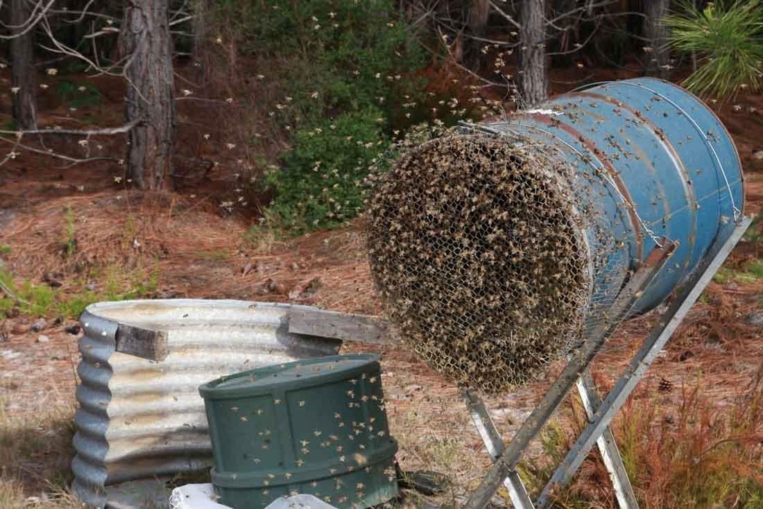 Beebuild pollen substitute-35